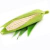 Bắp nếp (Trái)