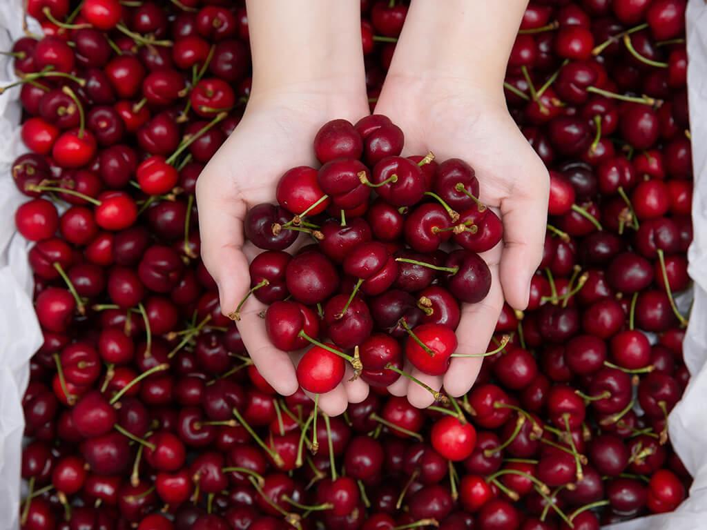 Cherry đỏ